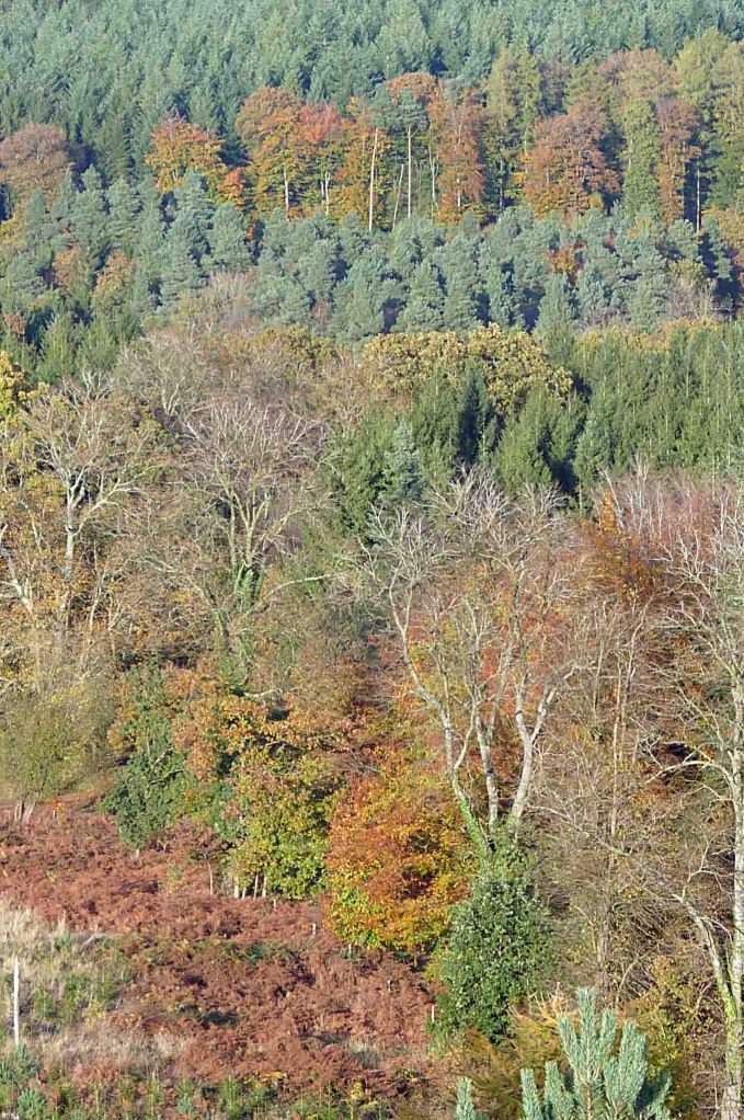 Forest of Dean, New Fancy View, 27 October MJMcGill 046