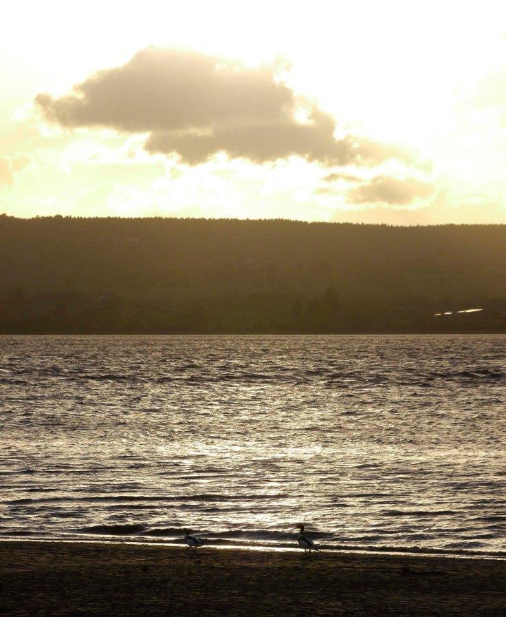 Severn Sunset, Middle Point Shelducks, MJMcGill 8 May 13