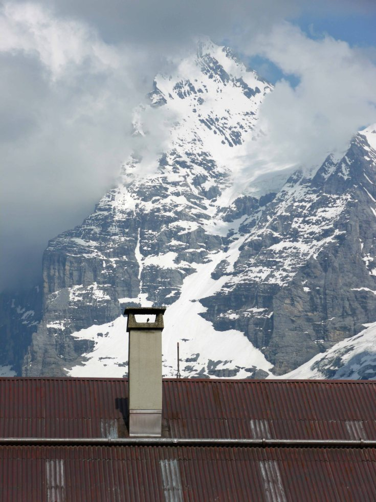Black Redstart and the Eiger, Murren, Switzerland, MJMcGill