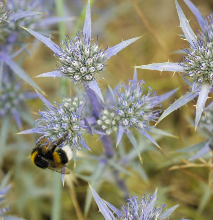 Bee, Grazalema