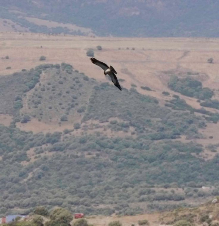 Booted Eagle, Casares castle