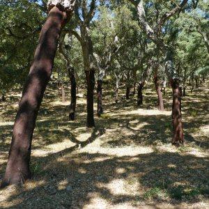 Cork Oak woodland, Sierra de Grazalema